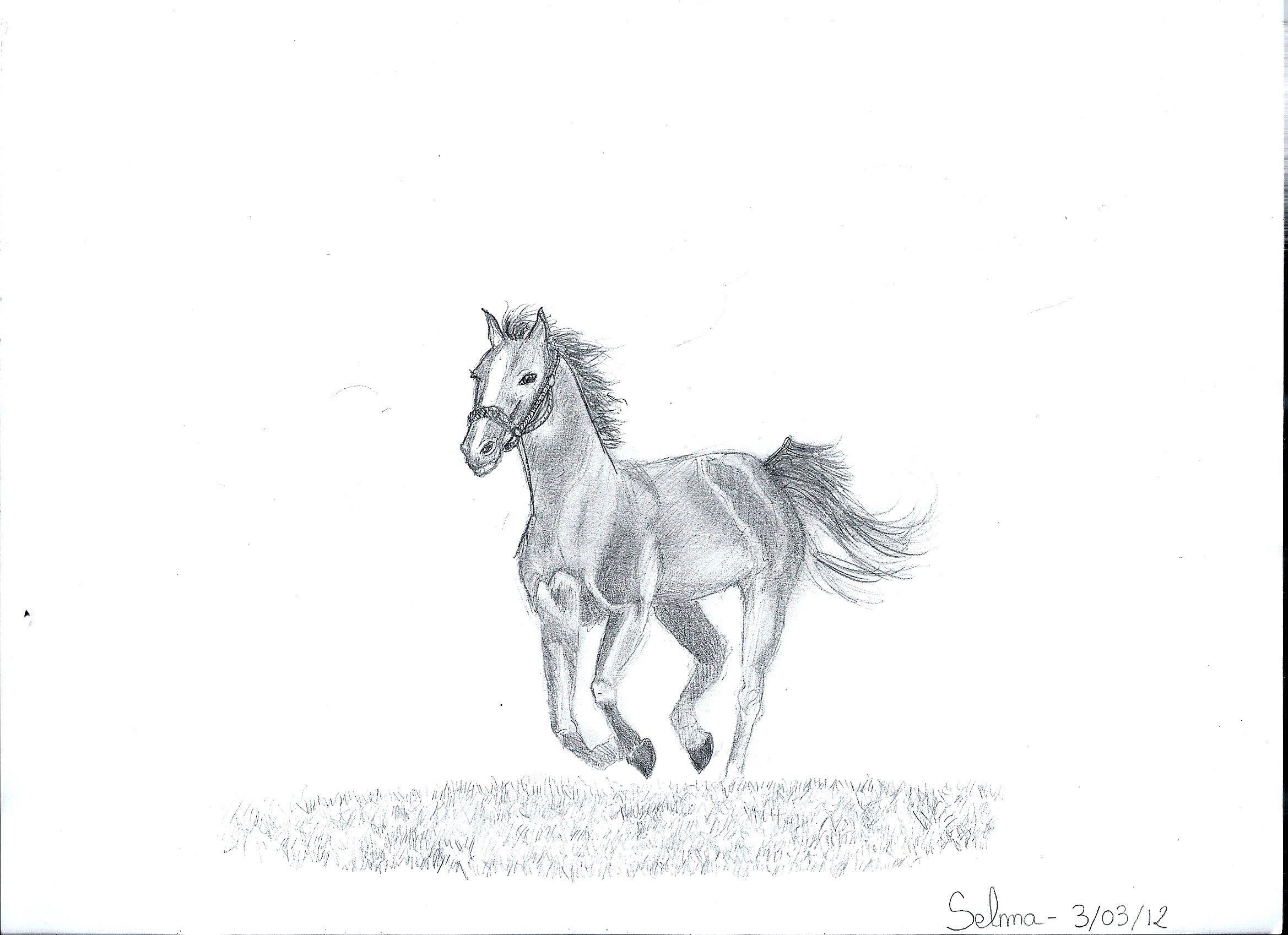 le cheval de guerre dans clara cornlia dessinselma0002 300x217
